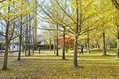 河口湖&八木崎公園:八木崎公園 (14).jpg