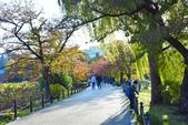 上野公園&不忍池:不忍池 (13).jpg
