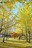 河口湖&八木崎公園:八木崎公園 (16).jpg