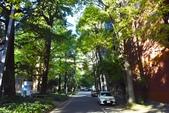 東京大學:東京大學 (16).jpg