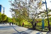 上野恩賜公園:上野公園 (10).jpg
