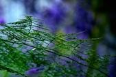 浪漫紫藤花園:A013.jpg
