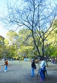 上野恩賜公園:上野公園 (13).jpg