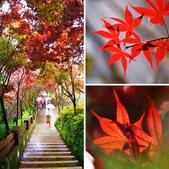 槭紅太平山:相簿封面