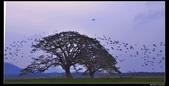 我的心遺留在印度洋上的珍珠~斯里蘭卡:nEO_IMG_DSC_0373.jpg