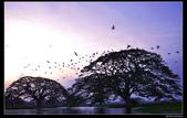 我的心遺留在印度洋上的珍珠~斯里蘭卡:nEO_IMG_DSC_0350.jpg