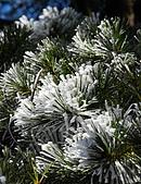 2010冬遊黃山:DSC_8913.jpg