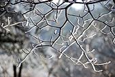 2010冬遊黃山:DSC_8920-1.jpg