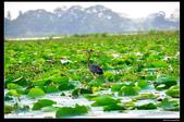 我的心遺留在印度洋上的珍珠~斯里蘭卡:nEO_IMG_DSC_0221.jpg