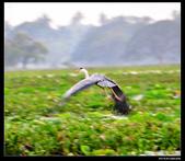 我的心遺留在印度洋上的珍珠~斯里蘭卡:nEO_IMG_DSC_0254.jpg