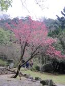 陽明山國家公園:陽明山花景.jpg