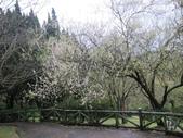 陽明山國家公園:陽明山花景-1.jpg