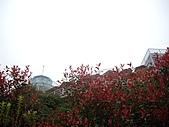 新竹尖石-數碼天空:IMGP4268.JPG