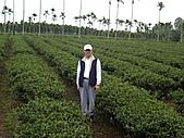 天鶴茶的故鄉:IMGP4700.JPG