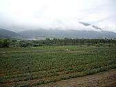 天鶴茶的故鄉:IMGP4656.JPG
