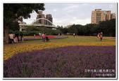 古亭河濱公園 地景花海:IMG_0259_副本.jpg