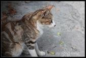 2013猴硐貓村:2013-08-11037.jpg