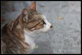 2013猴硐貓村:2013-08-11038.jpg