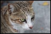 2013猴硐貓村:2013-08-11039.jpg