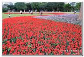 古亭河濱公園 地景花海:IMG_0282_副本.jpg