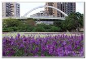 古亭河濱公園 地景花海:IMG_0228_副本.jpg