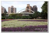 古亭河濱公園 地景花海:IMG_0226_副本.jpg