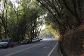 100.12.30橫山步道:DPP橫山步道01.JPG
