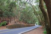 100.12.30橫山步道:DPP橫山步道54.JPG