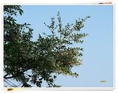 (yahoo)台中(大坑。東豐綠廊。台中公園。高美濕地):烏皮九芎-雅云山莊