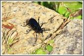昆蟲:_MG_8697.JPG