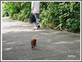 (yahoo)陽明山公園。小油坑。擎天崗。冷水坑:陽明山公園賞櫻隨拍