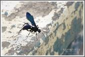 昆蟲:_MG_8676.JPG