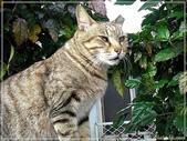 (yahoo)貓咪。狗狗:淡水夯貓咪