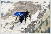 昆蟲:_MG_8677.JPG