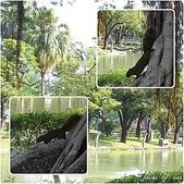 (yahoo)台中(大坑。東豐綠廊。台中公園。高美濕地):台中公園4.jpg