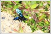昆蟲:_MG_8694.JPG