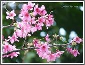 (yahoo)竹圍。紅樹林。淡水:P1910132.JPG