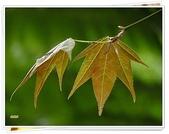 (yahoo)台中(大坑。東豐綠廊。台中公園。高美濕地):楓-2011春遊東勢