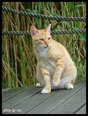 (yahoo)貓咪。狗狗:植物園貓咪