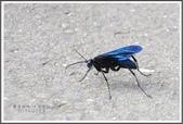 昆蟲:_MG_8683.JPG
