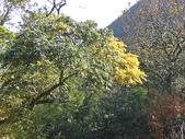 (yahoo)陽明山公園。小油坑。擎天崗。冷水坑:CIMG4931.JPG