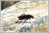 昆蟲:_MG_8666.JPG