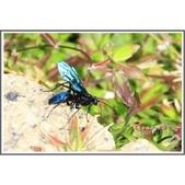 昆蟲:相簿封面