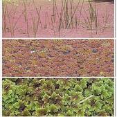 (yahoo)蕨類植物:相簿封面