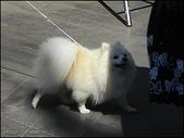 (yahoo)貓咪。狗狗:狗狗