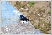 昆蟲:_MG_8705.JPG