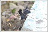 昆蟲:_MG_8712.JPG