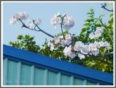 (yahoo)台中(大坑。東豐綠廊。台中公園。高美濕地):風鈴木