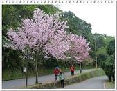 (yahoo)機車遊:2011陽明山花季