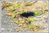 昆蟲:_MG_8701.JPG
